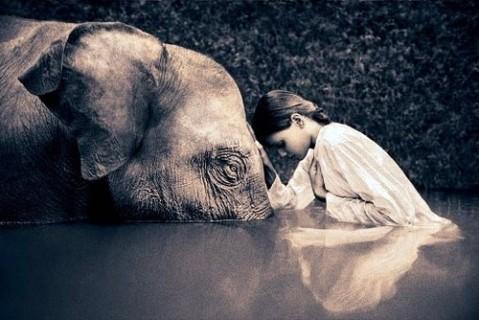 elefant02